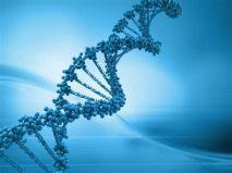 eliche DNA