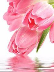 tarocchini fiori